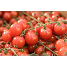 Photo de Tomate cerise en grappe